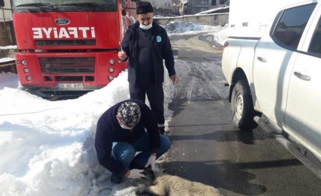 Hakkari Belediyesi can dostların yaralarını sarıyor