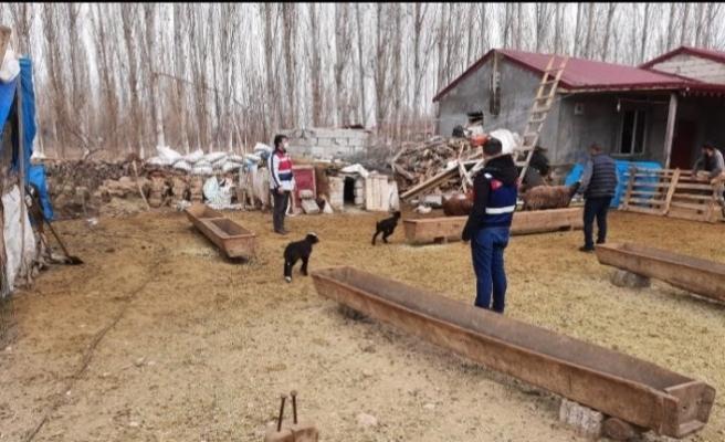 Iğdır'da hayvan hırsızlığına 7 gözaltı