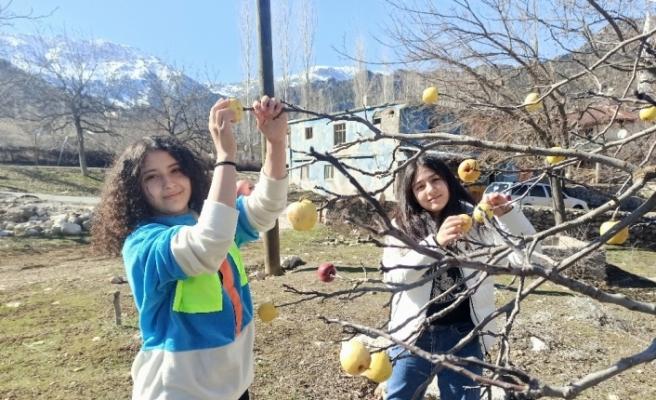 Kuşlar için ağaçlara elma astılar