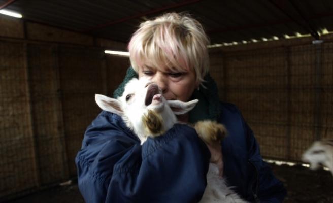(Özel) Beslediği keçilerin ne etinden ne de sütünden faydalanıyor