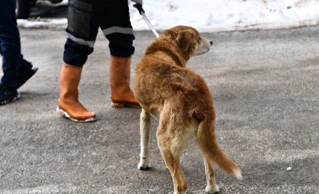 Tümörlü köpek sağlığına kavuştu