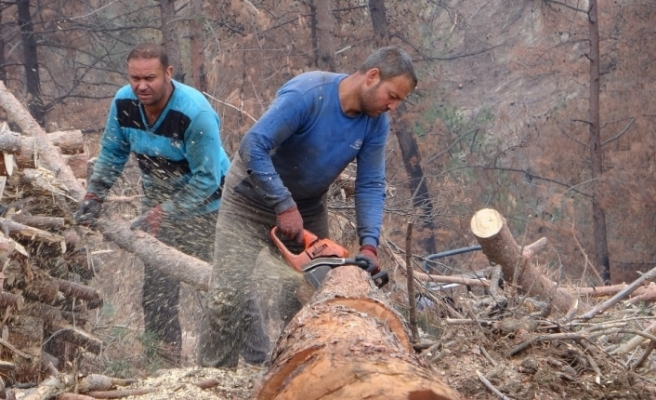 Yanan ormanlık alanları küllerinden yeşertmek için çalışıyorlar