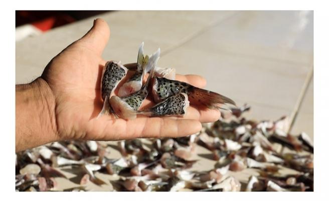 Balıkçıların 'kuyruk teşviki' sevinci