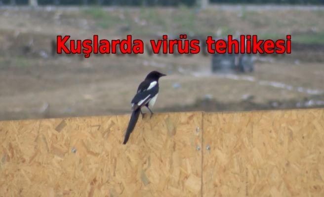 Kuşlarda Batı Nil Virüsü saptandı; Prof. Dr. Yılmaz uyardı