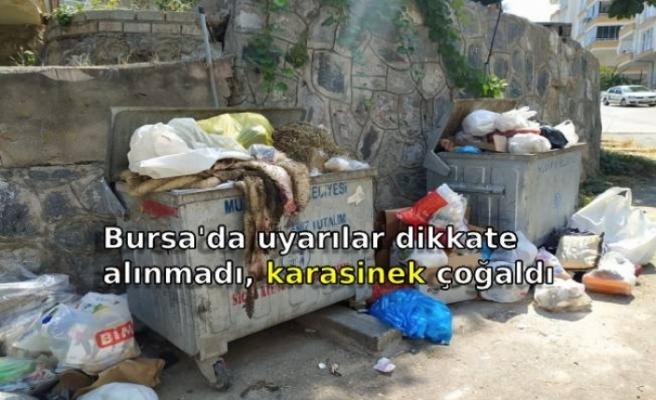 Bursa'da uyarılar dikkate alınmadı, karasinek çoğaldı