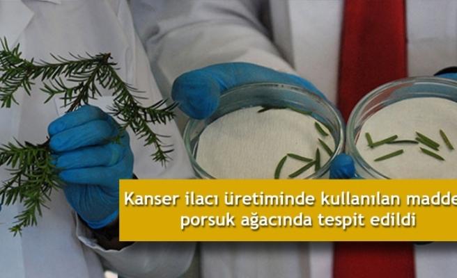 Kanser ilacı üretiminde kullanılan madde, porsuk ağacında tespit edildi