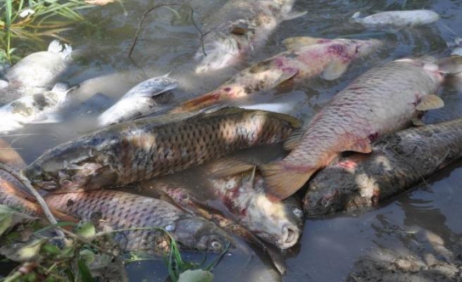Toplu balık ölümleri hakkında açıklama