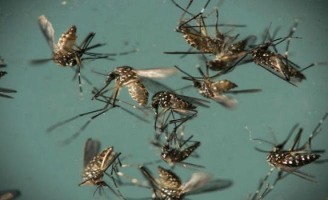 Zika virüsü Türkiye'de göründü, Sağlık Bakanlığı açıklama yaptı