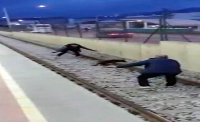 Metroda raylar üzerinde köpek kurtarma operasyonu