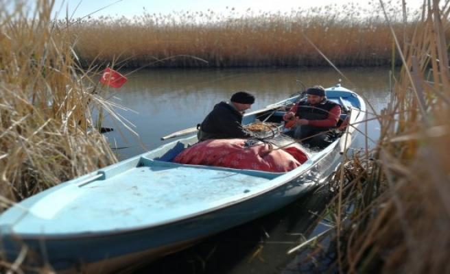 İznik Gölü'nde korkutan azalma!
