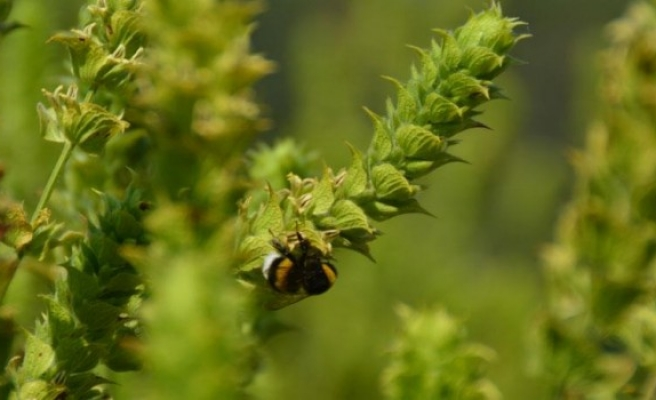 Şifalı bitkiler ekonomiye can veriyor