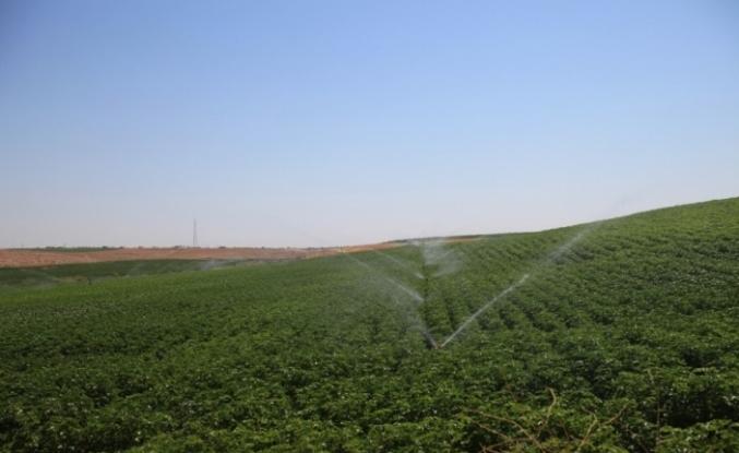 Mardin'de 100 bin dekar tarım arazisi sulandı