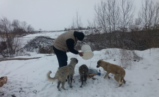 Kısıtlamada aç kalan hayvanları elleriyle beslediler