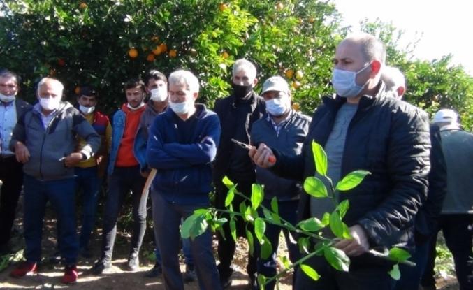 Kozan'da meyve ağaçlarını budama kursu