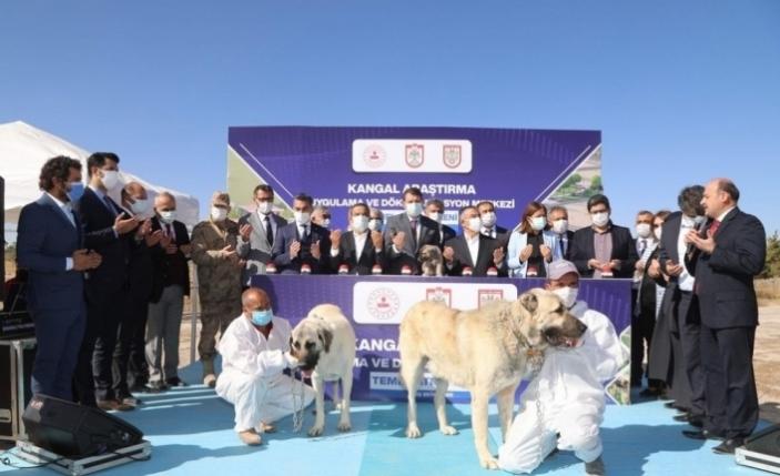 Kangal köpeği Araştırma ve Dokümantasyon Merkezi'nin temeli atıldı