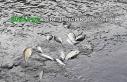 Bursa'da derede balık ölümleri