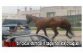 Bursa'da bir çocuk otomobilin bagajında ata ip bağladı