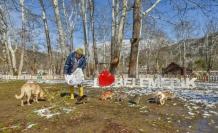 Büyükşehir karla mücadele ediyor, sokak hayvanlarını besliyor