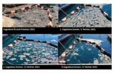 İÜ Su Bilimleri Fakültesi, müsilajı deniz bakterisiyle temizledi