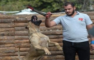 Sayaç Operatörlerine Köpek Eğitimi