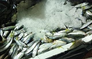 1,5 ton balığa el konuldu