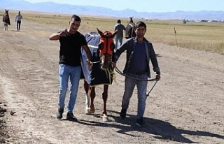 Ağrı'da yapılan mahalli at yarışlarına...