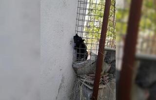 Başı tele sıkışan kediyi itfaiye kurtardı