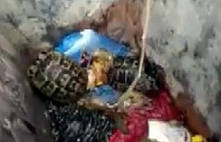 Çöpe atılan kaplumbağaları, temizlik görevlisi...