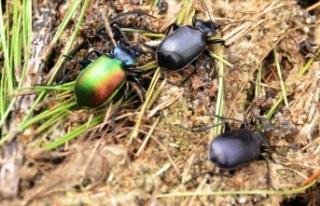 Terminatör Böcekler Devrede