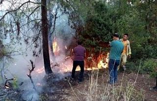 Osmaniye'de ormanlık alanda yangın; alevler...