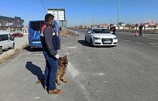 Aksaray jandarması detektör Sala ile uygulamada
