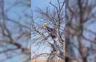 Çıktığı ağaçta mahsur kalan kediyi vatandaşlar...