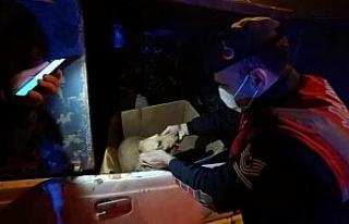 Jandarmadan yaralı köpeğe yardım eli