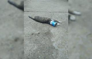 Kafası konserve kutusuna sıkışan kediyi itfaiye...