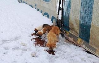 Körfez Belediyesi'nden sokak hayvanlarına şefkat...