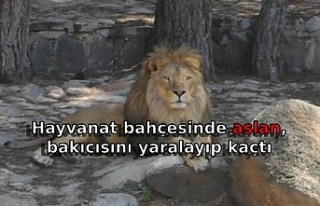 Hayvanat bahçesinde aslan, bakıcısını yaralayıp...