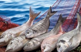 Su ürünleri ve hayvansal mamuller ihracatı arttı