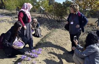 Mucize bitki turistlerin ilgi odağı haline geldi