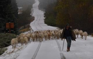 Koyunların Zirve Kampı Erken Bitti