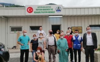Artvin'de sokak hayvanlarını kısırlaştırılıyor