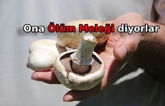 Prof. Dr. Türkekul'dan 'ikiz mantar' uyarısı