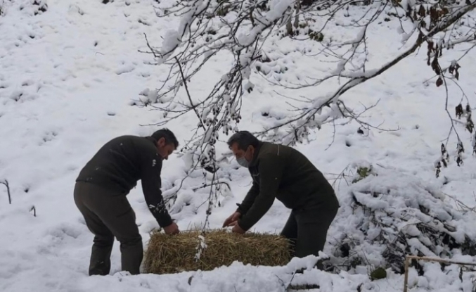 Artvin'de çetin kış şartları nedeniyle yaban hayvanları için doğaya yem bırakıldı