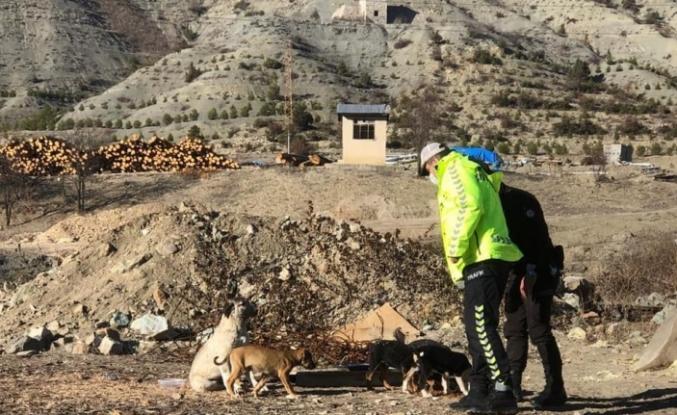 Artvin'de sokağa çıkma kısıtlamasında sokak hayvanları unutulmadı