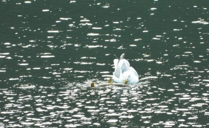 Yabani kuşlar için doğaya yem bırakıldı