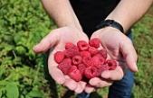 Meyveciliğe Büyükşehir'den Büyük destek