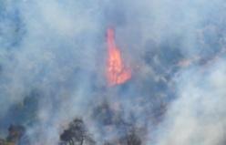 Bursa Mudanya orman yangını