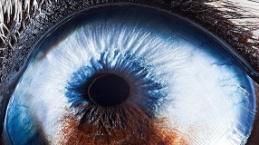 İşte farklı canlılardaki yakın çekim görüntülerinin büyüleyici görselleri