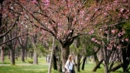 Bursa'ya bahar geldi... Şehir çiçeklerle donatıldı.
