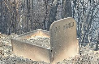 Bursa'daki orman yangınından acı görüntüler!