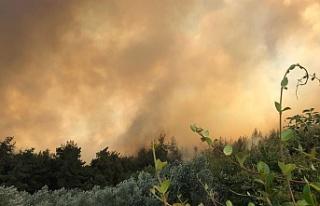 Mudanya'daki yangına Başsavcılık soruşturması